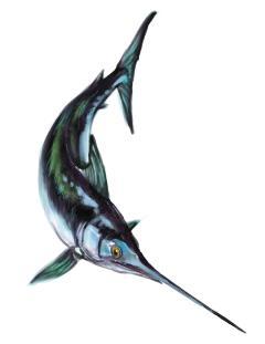 Il pesce spada.jpg